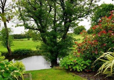 Respuestas a preguntas comunes sobre plantación masiva