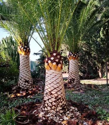 Cepillado de troncos Castellón