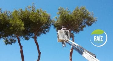 Poda de árboles en Alicante, Castellón, Valencia y Murcia