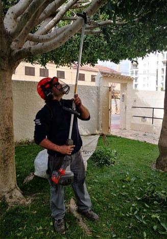 Poda de árboles Valencia