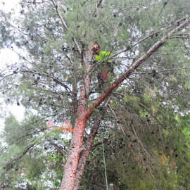 Poda de árboles Castellón