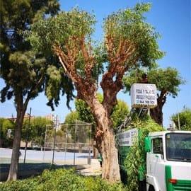 Poda de árboles Murcia