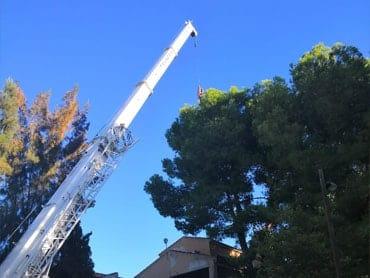 Tala de árboles Alicante