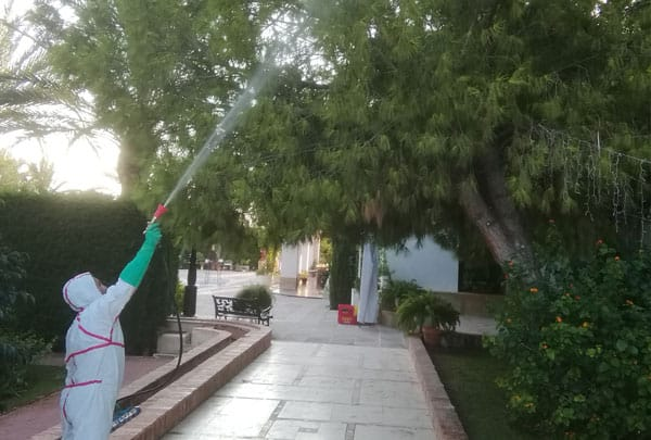 Tratamiento procesionaria Murcia