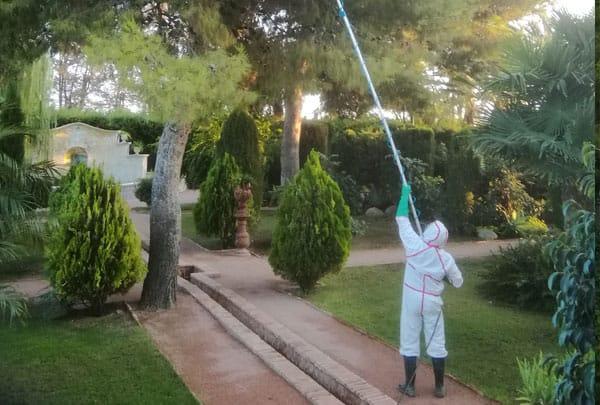 Tratamiento procesionaria Valencia
